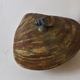 Large Japanese ceramics box in the shape of a shell, signed  - Image 6