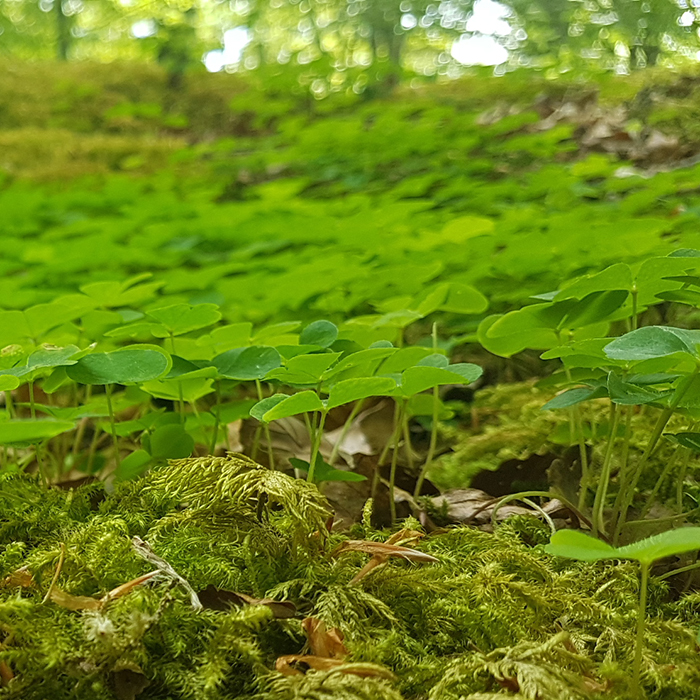 Gå på toa i naturen