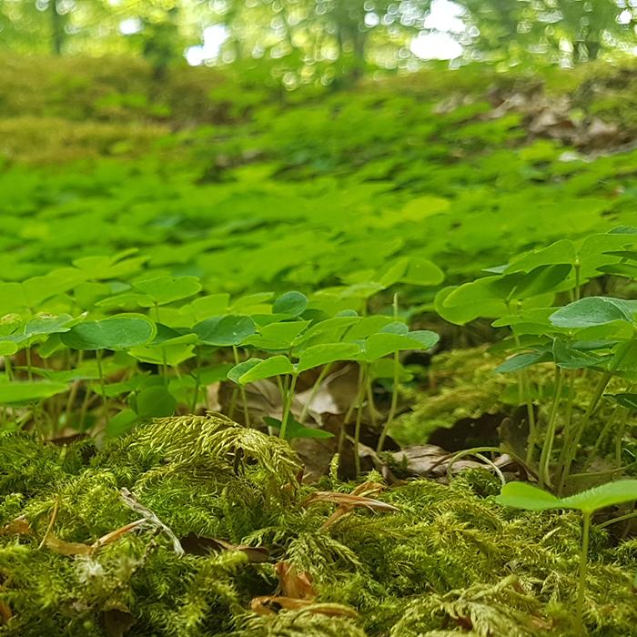 In der Natur aufs Klo gehen