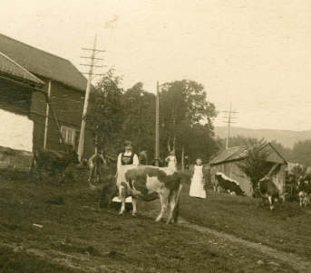 Frå Gørvell-garden, der slåttekaren Knud Hansen Nesje hadde pliktarbeid som 1. slåttekar, 1916. Foto: Birkeland/Romsdalsmuseets fotoarkiv.