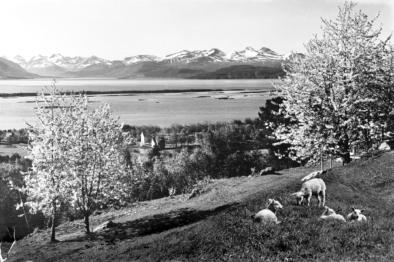 Utsyn frå Rekneslia, der Nesje bygde småbruket sitt. Foto: Birkeland/Romsdalsmuseets fotoarkiv.