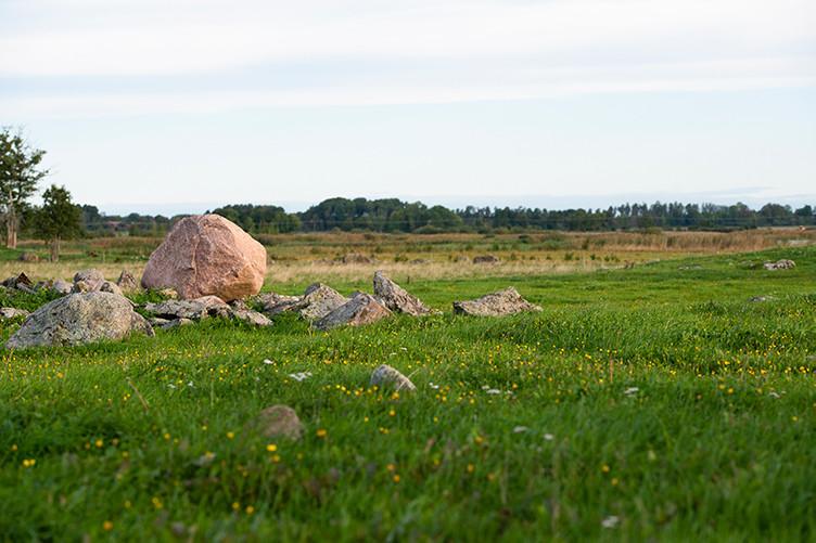 Gräs och stenar i somrigt landskap.