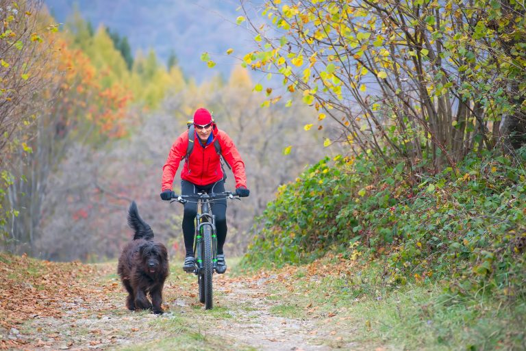 Man on a bicycle with her dog on the street in the woods