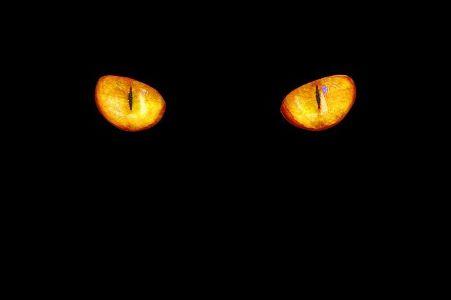 Piilolinsseillä voit saada kissansilmät