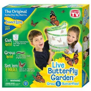 Insect Lore - Butterfly Garden (60099)