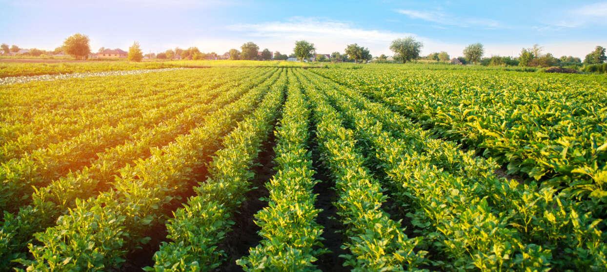Farm field in bright sunlight