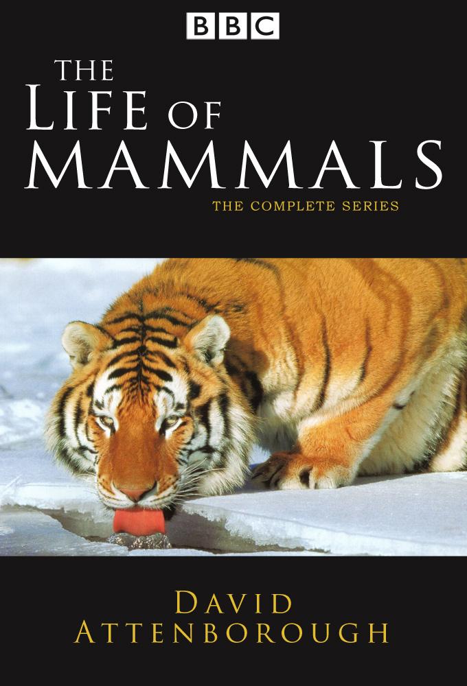 Däggdjurens liv
