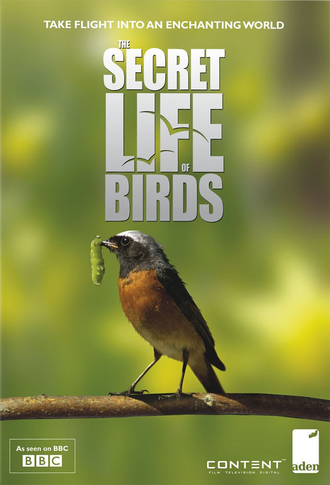 The Secret Life of Birds